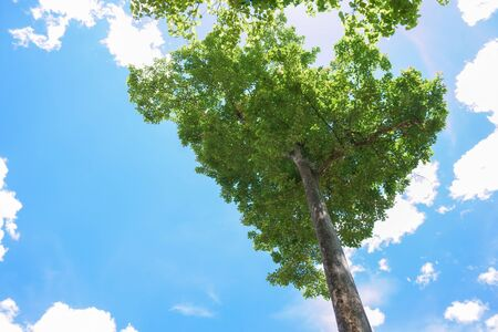 Green leaves and big tree on blue sky background Stock Photo