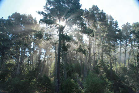 Forest Light Фото со стока