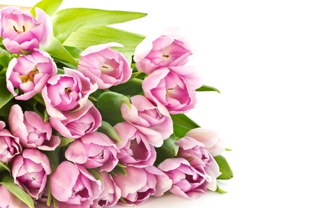 pink tulips: beautiful bouquet of purple tulips from the set