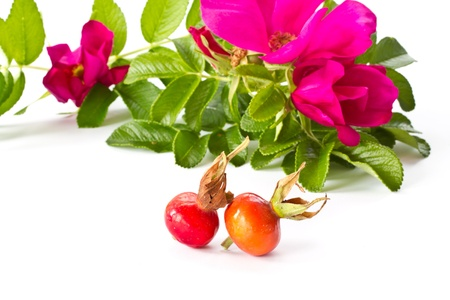 ripe fruit and beautiful flowers wild rose on a white background photo
