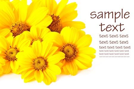 在白色背景上的黃色美麗的花朵 版權商用圖片