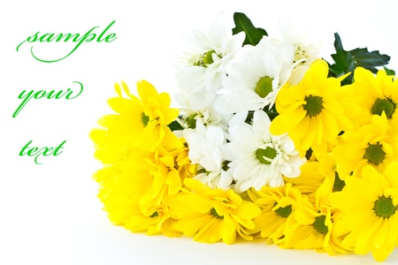beautiful bouquet of yellow chrysanthemums on a white background photo