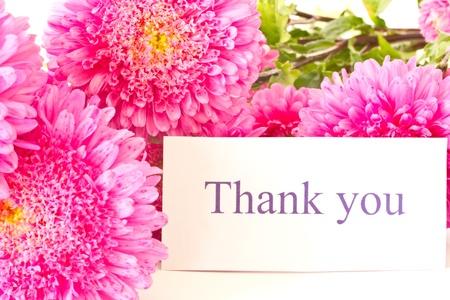 """caes: """"Gracias"""" en un fondo de color rosa hermosos asters Foto de archivo"""