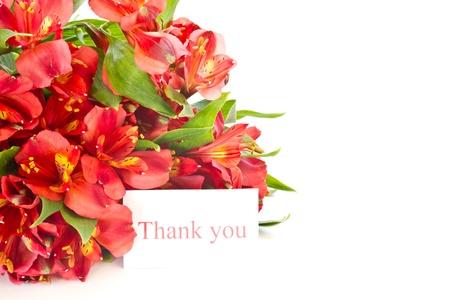 在白色背景上alstroemerias一束紅色鮮花