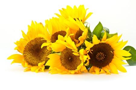 美麗的花束在白色背景上的向日葵