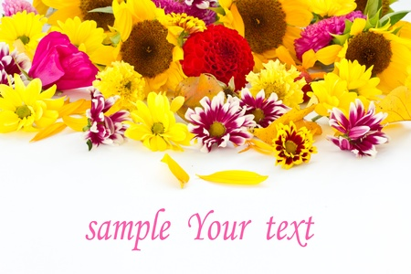 your text: many beautiful fall colors on a white background