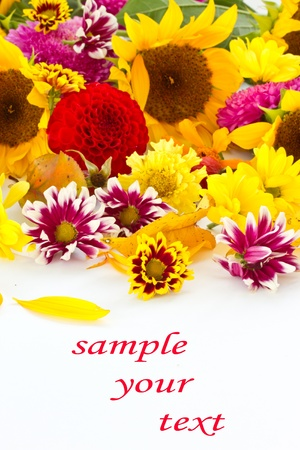 many beautiful fall colors on a white background photo