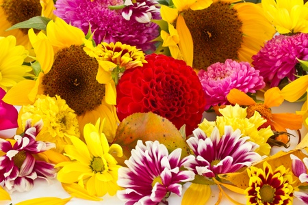 background of many different colorful autumn flowers photo