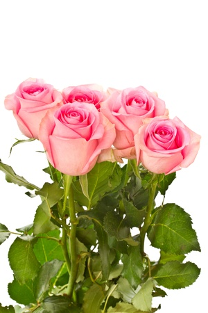 mooie natuurlijke roze roos op witte achtergrond
