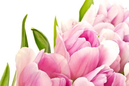 mooi boeket van paarse tulpen uit de set Stockfoto