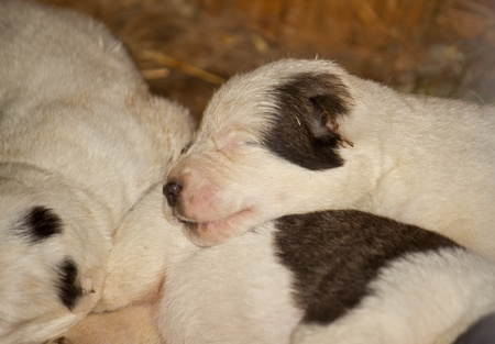 newborn sleeping little puppy   Stock Photo - 10998688