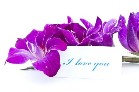 declaracion de amor: declaraci�n de amor en el marco de hermosas flores