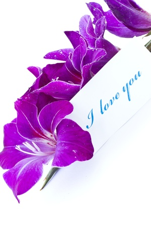 declaration of love against the backdrop of beautiful flowers photo