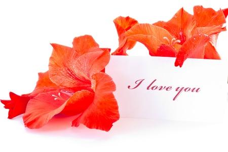 d�claration d'amour sur fond de belles fleurs Banque d'images - 10992810