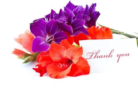 bright beautiful Gladiolus isolated on a white background Stock Photo - 10992692