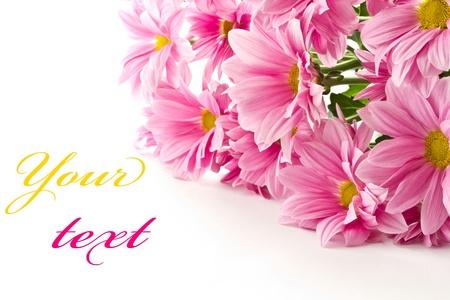désolé: bouquet de fleurs roses sur un fond blanc Banque d'images
