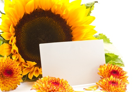 een boeket van prachtige bloemen op een witte achtergrond Stockfoto