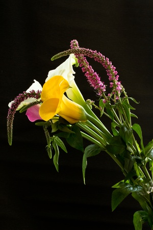 beautiful bouquet of colorful calla lilies on a black background photo