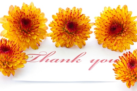 thank you on a background of orange chrysanthemums photo