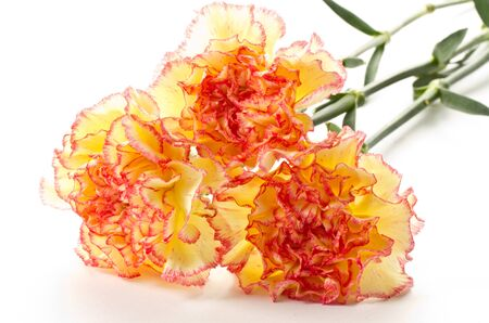 carnation bouquet flowers on a white background Stock Photo - 10994409