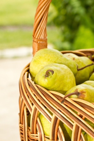 basketful of ripe green pears photo