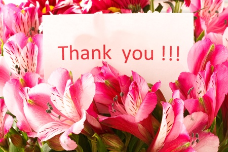 brief 'thank you' on the background of a flower photo