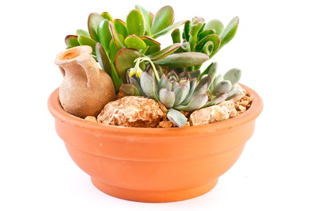 collection of succulents in a pot is isolated on a white background Stock Photo - 11067731