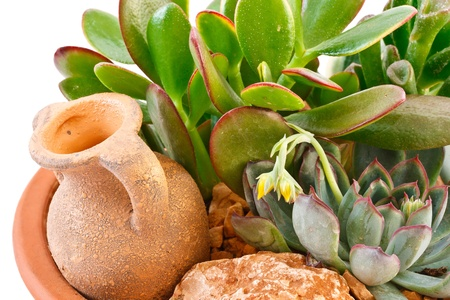 collection of succulents in a pot is isolated on a white background photo