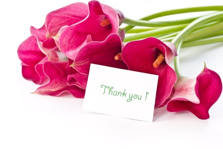 Rode Calla mooie bloem op een witte achtergrond