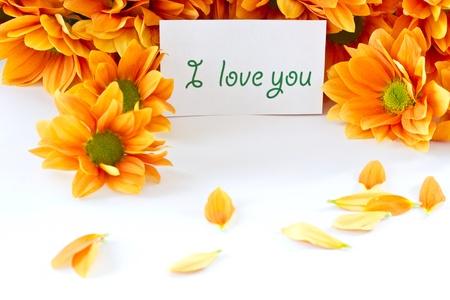 Chrysanthemum orange flowers on a white background Stock Photo