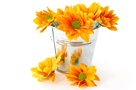 yellow flowering Chrysanthemums in a bucket on a white background photo