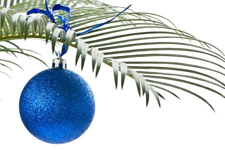 Nieuwe blauwe bal op de palm-tak op een witte achtergrond Stockfoto