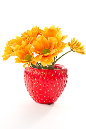 Chrysanthemums are beautiful in a pot on a white background photo