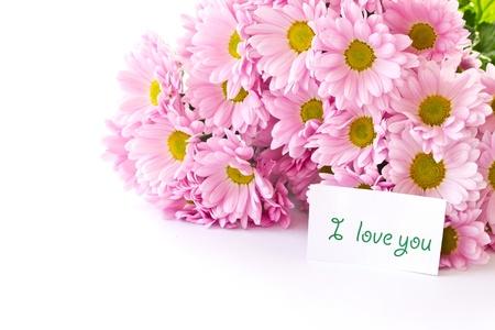 Beautiful pink chrysanthemums on white background photo