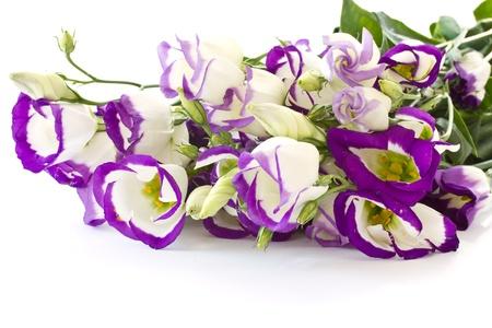 Lisianthus beautiful flowers on a white background photo