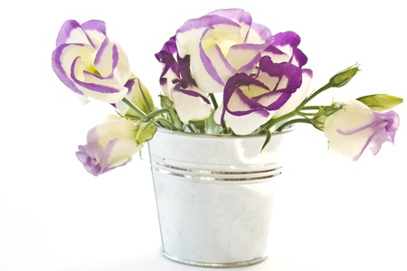 Lisianthus beautiful flowers on a white background photo