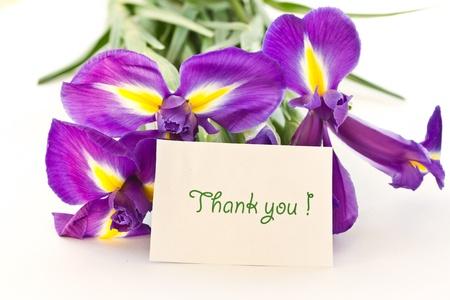 beautiful purple iris flower on a white background Stock Photo - 11554152