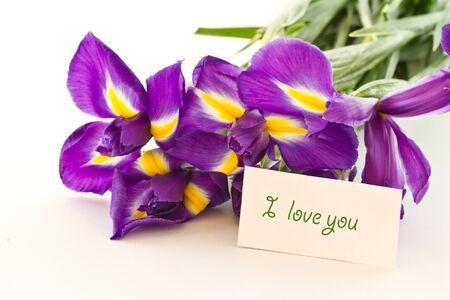 beautiful purple iris flower on a white background photo