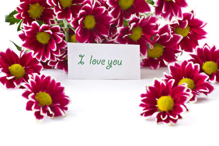a bouquet of beautiful purple chrysanthemums on white background photo