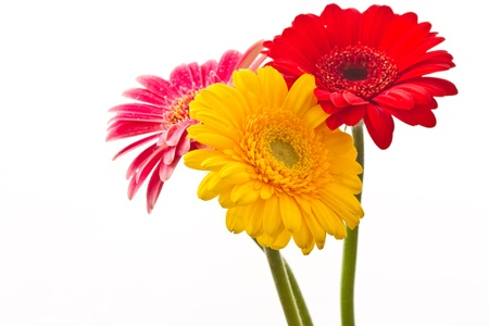 beautiful bouquet with red Gerbera on white background photo