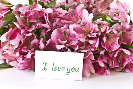 bouquet of pink alstroemeria on white background photo