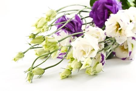 mooi boeket van bloemen lisianthus op witte achtergrond Stockfoto