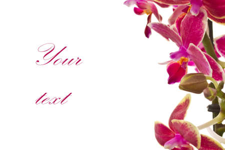 sample text: blooming phalaenopsis on beautiful bright white background