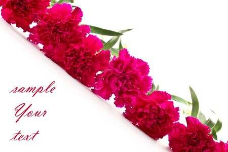 fresh red carnations on the beautiful white background photo