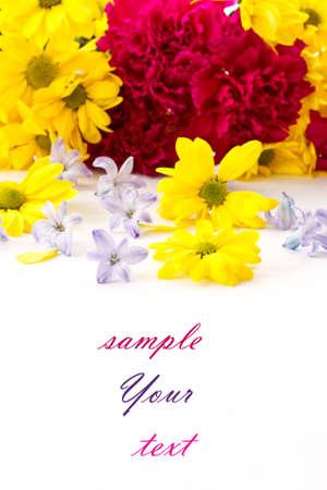 clavel: flores de crisantemo, clavel, jacinto y sobre un fondo blanco Foto de archivo
