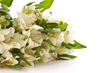 beautiful bouquet of white alstroemeria on a white background photo