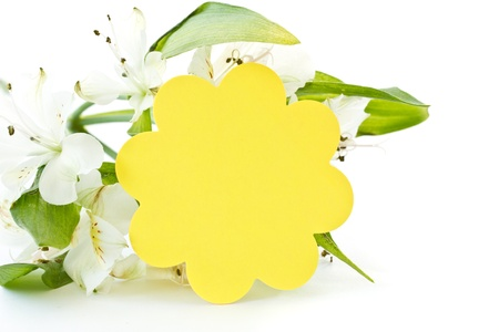 Alstroemeria and white card on a white background Stock Photo - 12805572