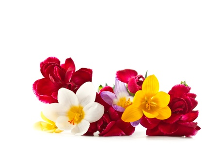 floristry: Bright carnations and crocuses on a white background Stock Photo