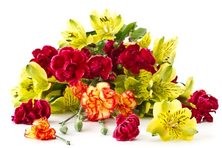 Alstroemeria and red carnations on a white background photo