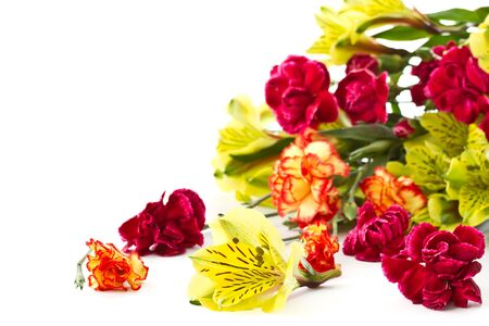 Alstroemeria and red carnations on a white background Stock Photo - 12973416